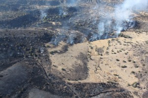 Big Bend Fires 2011 031