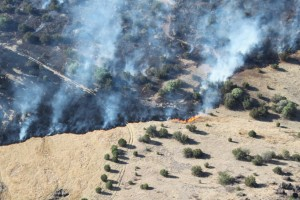 Big Bend Fires 2011 035